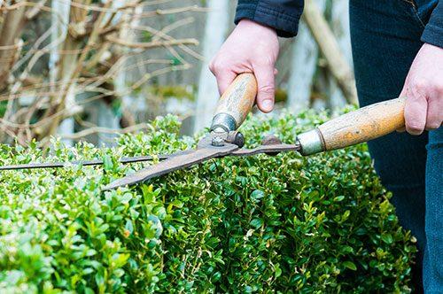secateur pour entretien jardin